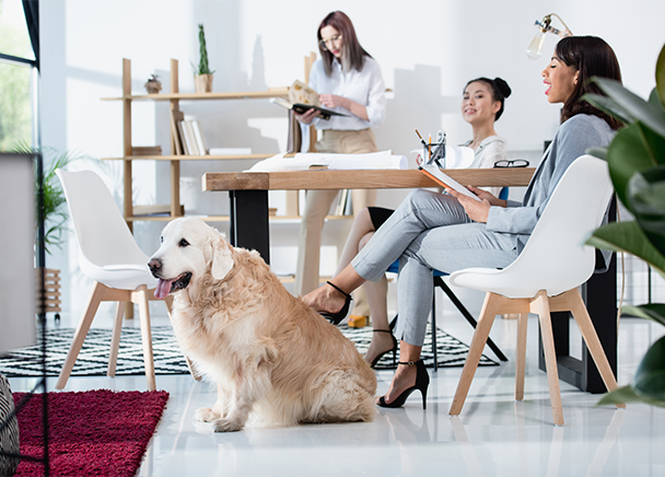 Why More Companies are Embracing a Dog-Friendly Workplace